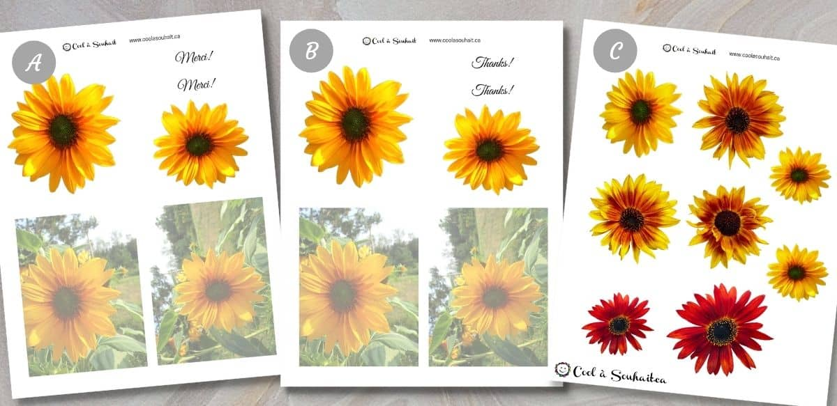 Document PDF avec fleurs de tournesols (sunflowers).